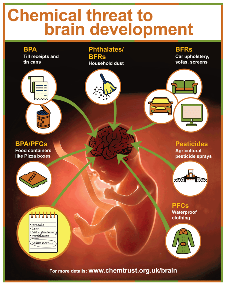 IT'S A NO BRAINER! Action needed to stop children being exposed to chemicals that harm their brain development!